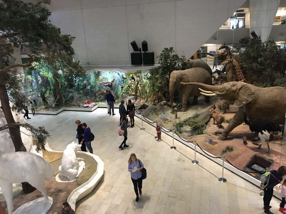 Экскурсия групп ПС 21,22 в Дарвиновский музей | 17.10.2019